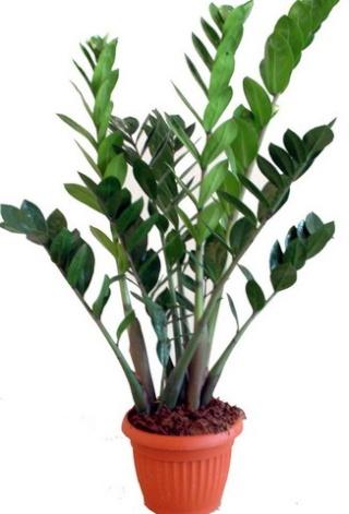 Plantes adapt es aux terrariums tropicaux humides - Plante d interieur facile a entretenir ...