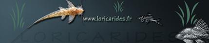 Forum francophone pour tous les passionnés de loricaridés