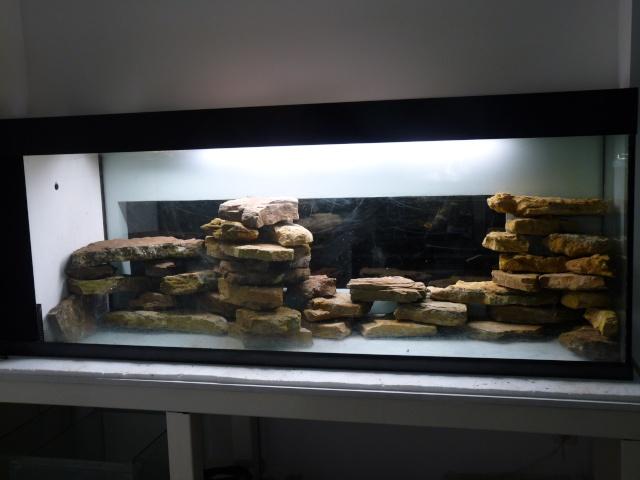 un aquarium sans substrat nutritif. Black Bedroom Furniture Sets. Home Design Ideas