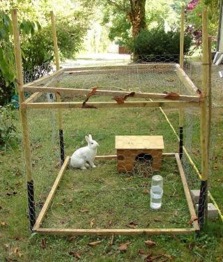 Un enclos dehors for Cage lapin exterieur