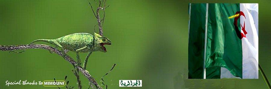 Algerie solidarité  Algerie patriotique
