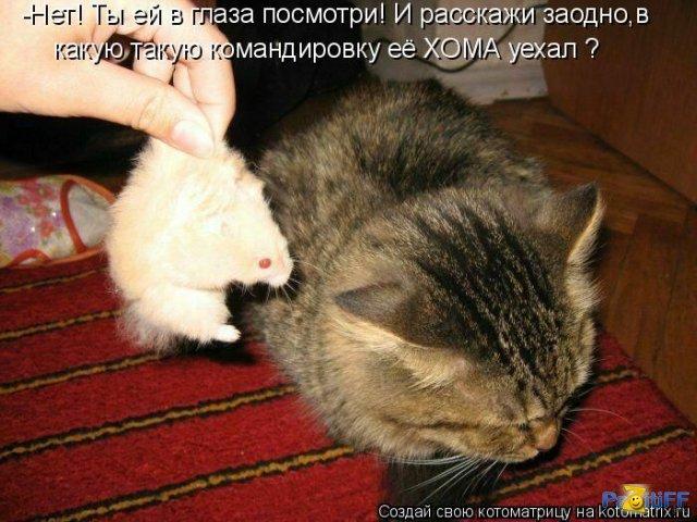 http://i59.servimg.com/u/f59/15/99/40/99/12885210.jpg