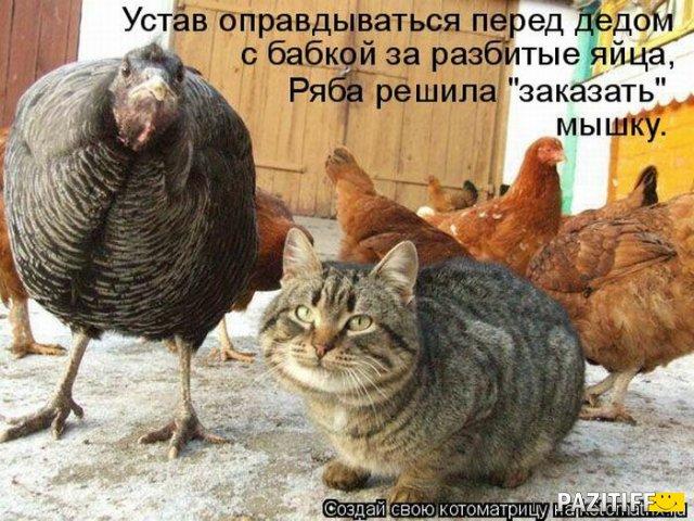 http://i59.servimg.com/u/f59/15/99/40/99/13187910.jpg