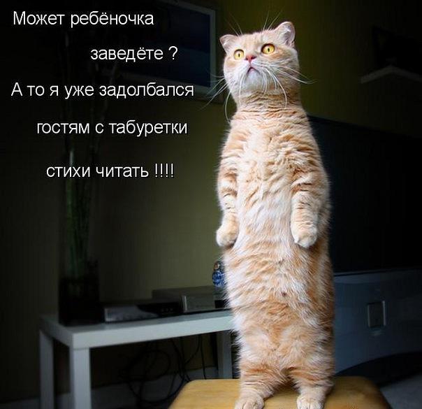 http://i59.servimg.com/u/f59/15/99/40/99/1720_610.jpg