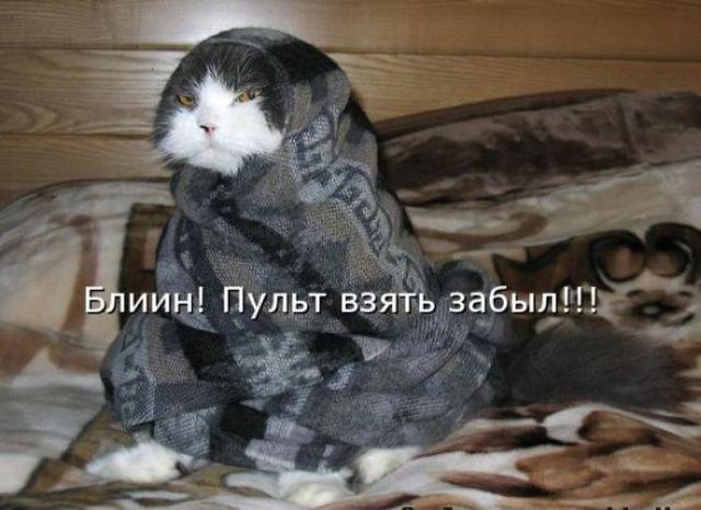 http://i59.servimg.com/u/f59/15/99/40/99/32187810.jpg