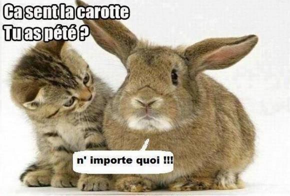 chat dialogue Le Blanc-Mesnil