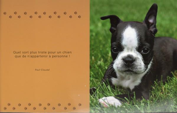 Célèbre citations sur le chien HG51