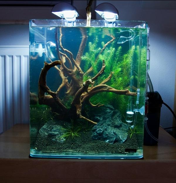 Mon futur aquarium for Poisson aquarium 30l