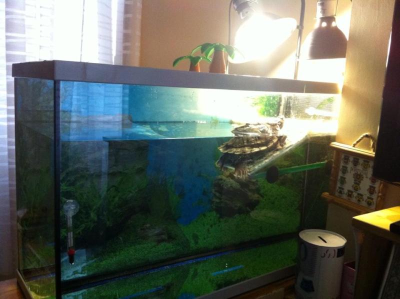 chauffage aquarium tortue