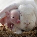 Forum nos animaux de compagnie... Cliques ICI pour découvrir tous les sujets......