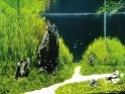 https://i59.servimg.com/u/f59/18/45/33/32/th/aquari10.jpg
