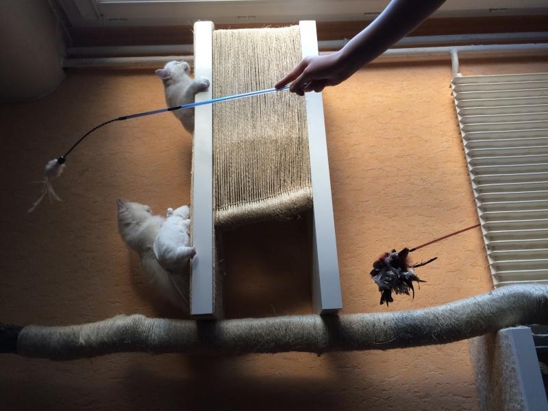 pour ma part c 39 est arbre chat maison. Black Bedroom Furniture Sets. Home Design Ideas