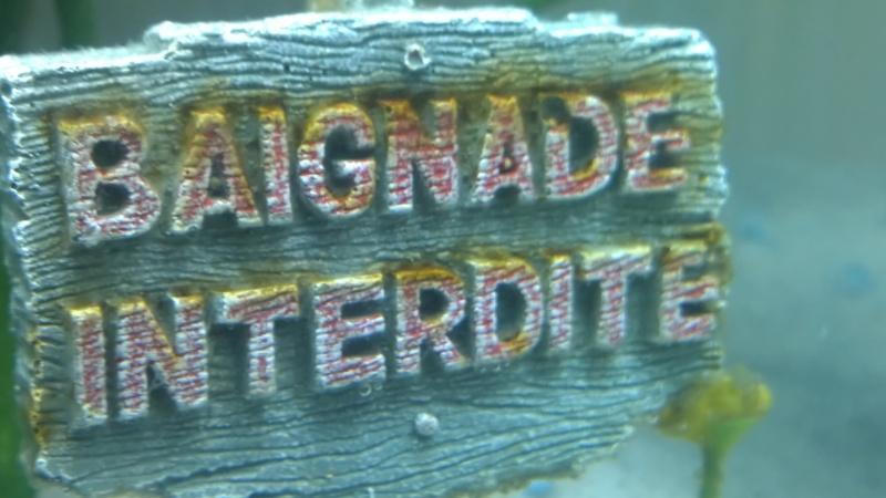 Algue visible en filament brun visible sur la déco