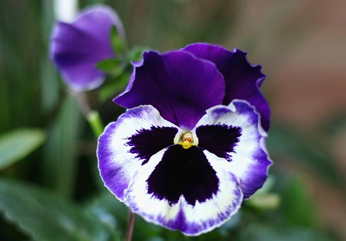 violet10.jpg